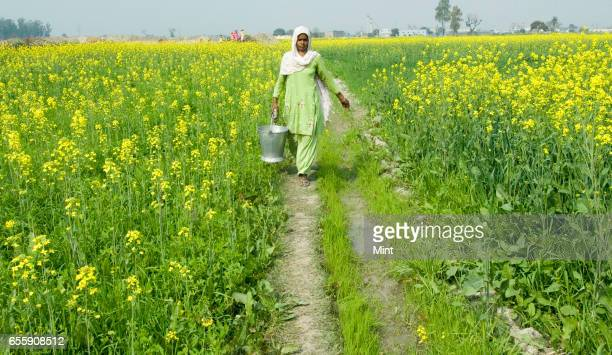 Lady walking in farmland of village Bazida Zattan photographed on February 24 2010 in Karnal India