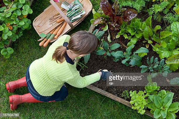 Lady Weeding A Corner of a Raised Bed Vegetable Garden