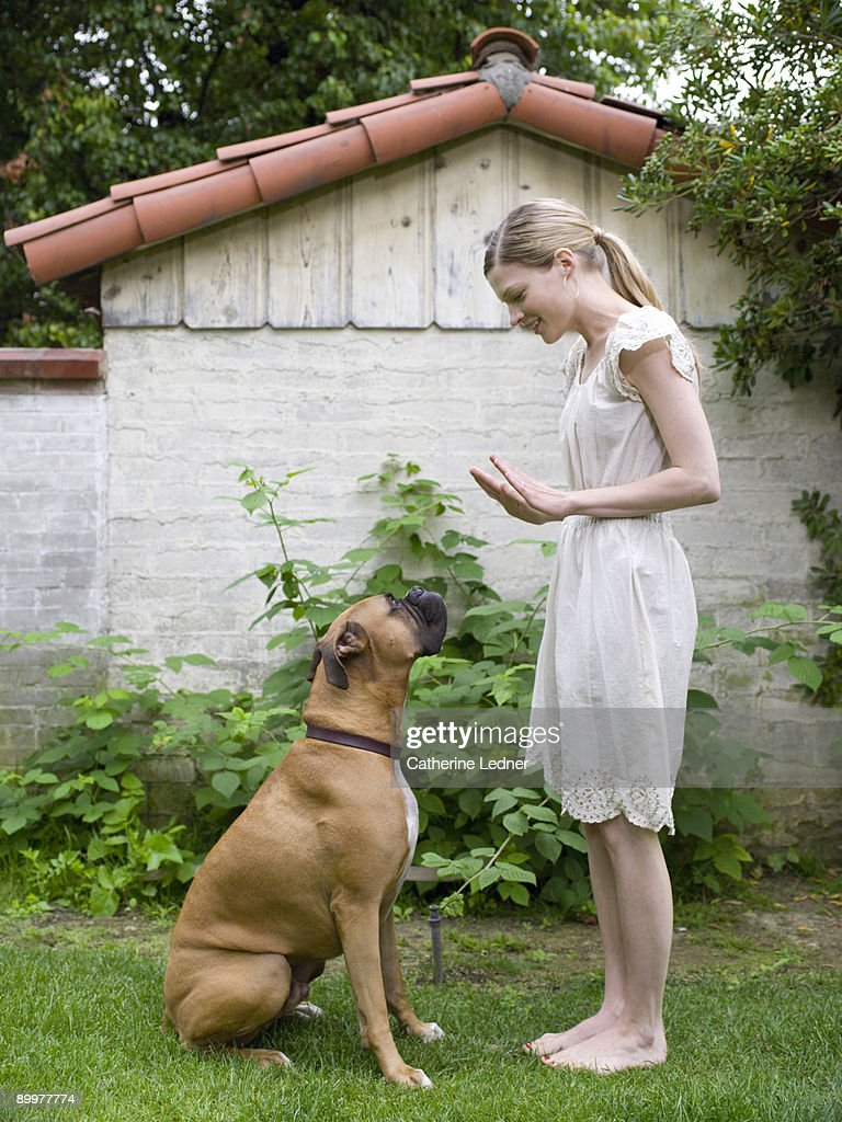 Lady with her Boxer (Canis lupus familiaris) : Stock Photo