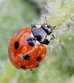 ladybird :)