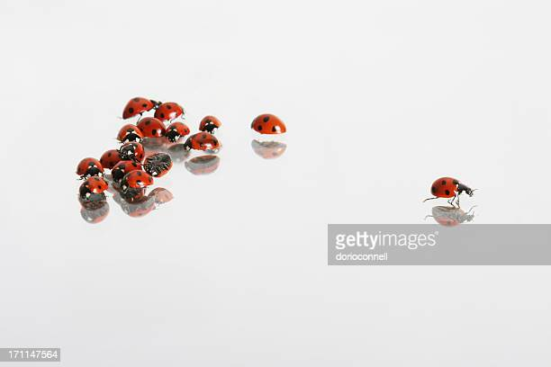 ladybirds, one getting away