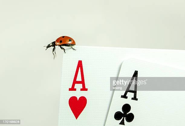 Joaninha e Lady sorte sobre cartões.