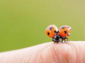 Ladybug on a finger