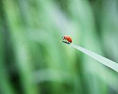 Ladybug on tip of leaf