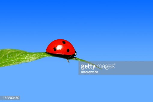 Ladybug on top of a leaf with blue sky on the background
