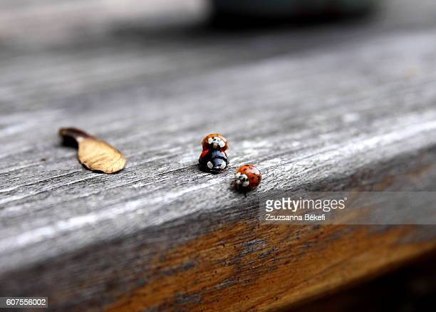 ladybugs mating on a garden table