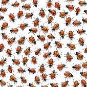 Ladybugs, overhead view, full frame (Digital Composite)