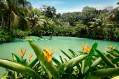 """""""Cranbrook flower forest, located in the south part of Jamaica. There are giant tree ferns, beautiful flowers and various exotic plants.SEE my other photos from JAMAICA:"""""""
