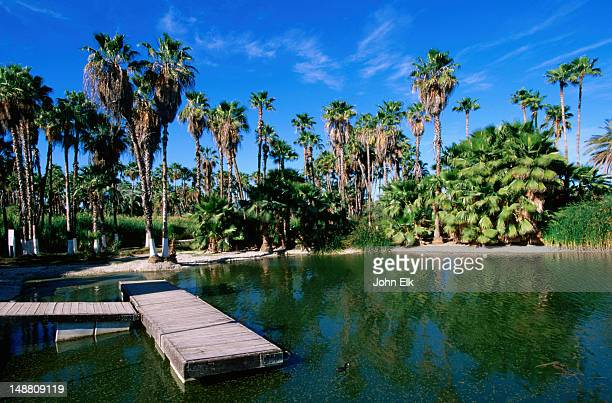 Lagoon, Estero de San Jose overlook.