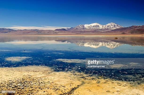 Lagoon, Maricunga, Atacama Desert, Chile