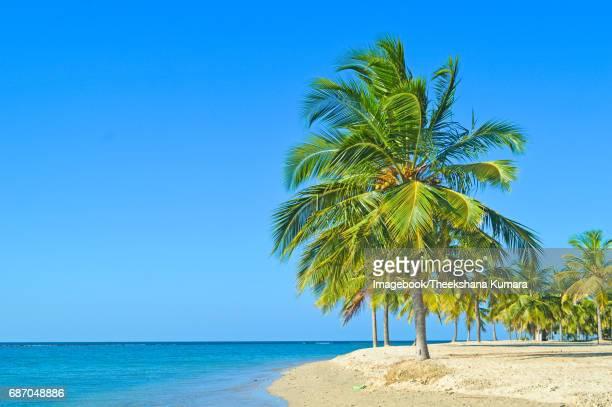 Lagoon, sea and palm trees.