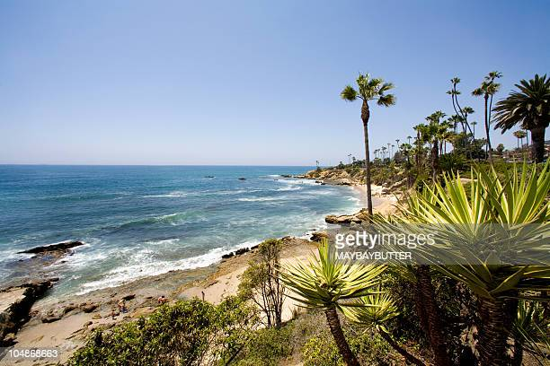 Laguna Beach coastline with palm trees and ocean waves