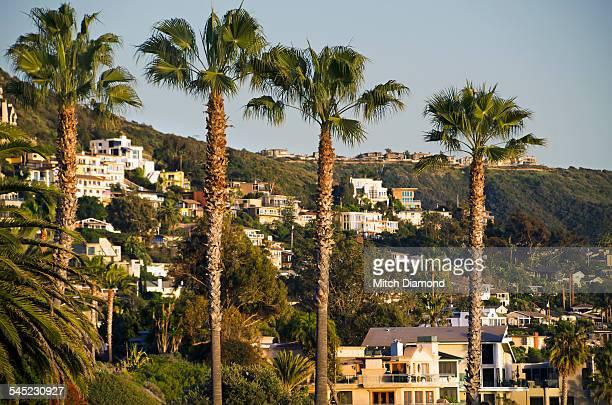 Laguna Beach hillside