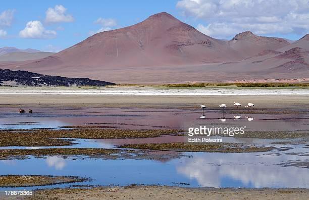 Laguna de Antofagasta