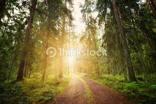 Lahemaa national park forest panorama : Stock Photo