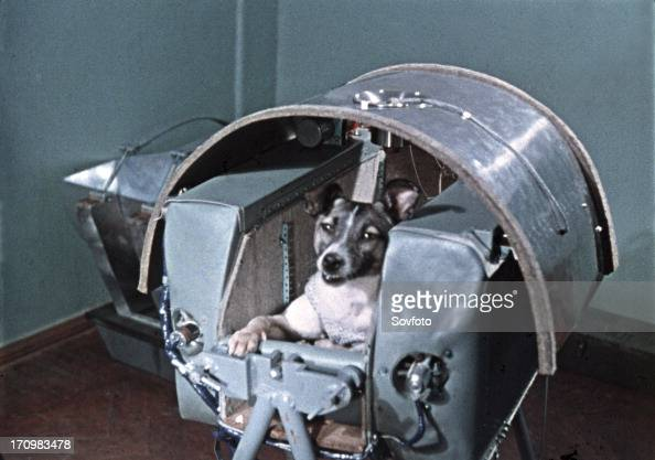 Laika Dog In Space Video