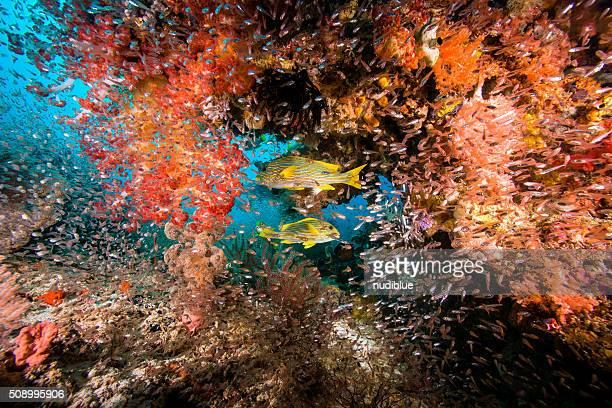 Laja ampat underwater