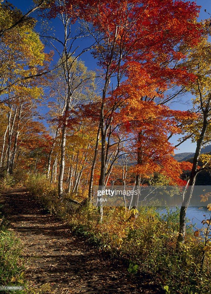 Lake Biwa and Autumn Leaves, Yamanouchi, Shimotakai, Nagano, Japan