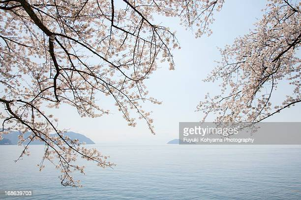Lake Biwa and cherry blossoms