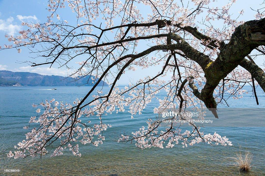 Lake Biwa in spring