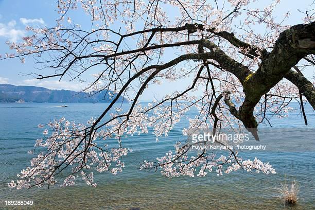 Lake Biwa in spring