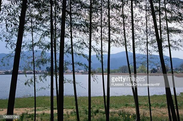 Lake Hirosawa and bamboo trees, Kyoto Prefecture, Honshu, Japan