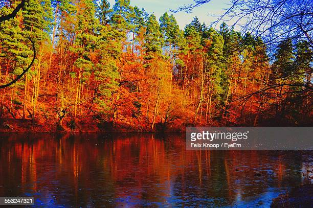 Lake In Front Of Trees During Autumn