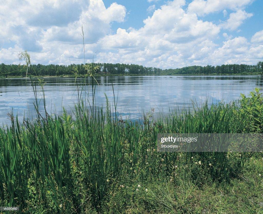Lake in Laura S Walker State Park, Georgia, USA