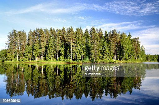 lake in the forest with reflection : Stock Photo