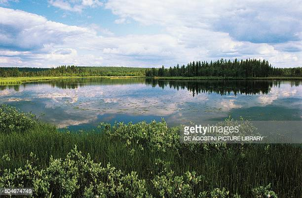 Lake in the taiga Lapland Sweden