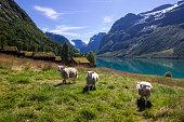 Lake Lovatnet in Norway