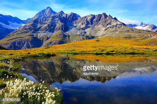 Lake mirrored swiss alps reflection, cotton wildflowers Field, Zermatt
