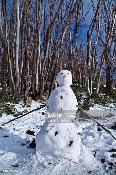 A snow man with a carrot nose in a eucalyptus forest clearing.