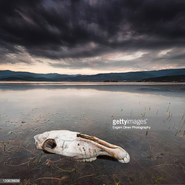 Lake of  dead