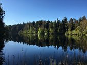 Mirroring lake of Gattikon in the middle of the woods