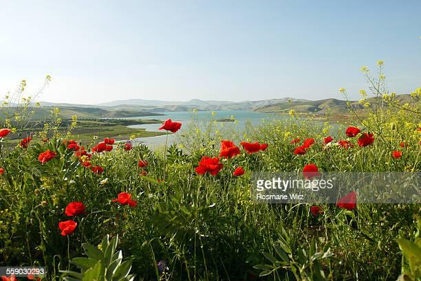 Lake Sidi Chahad, Morocco