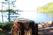 Tree stump captured in front of a lake view of Sharbot Lake