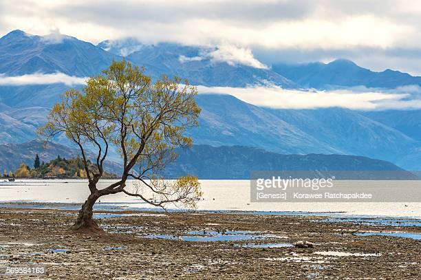 Lake Wanaka with the famous tree