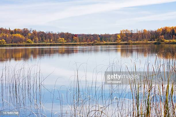 Lake with Reeds and Autumn Forest Reflections