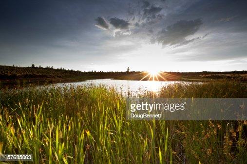 Lakeside Habitat Sunset