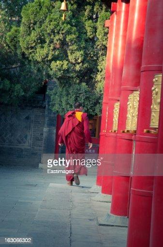 Lama in Temple,xi'an china.