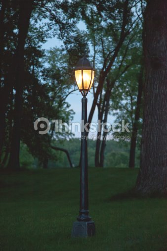 your forest bedroom for pics lamp