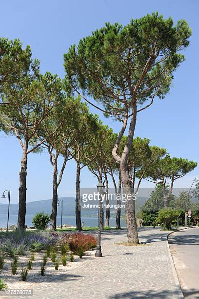 Lamps and trees by Lake Bracciano, Italy