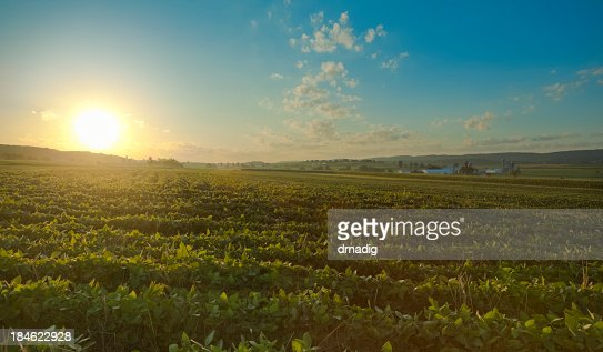 Lancaster County Sunrise over Field with Farm in the Distance