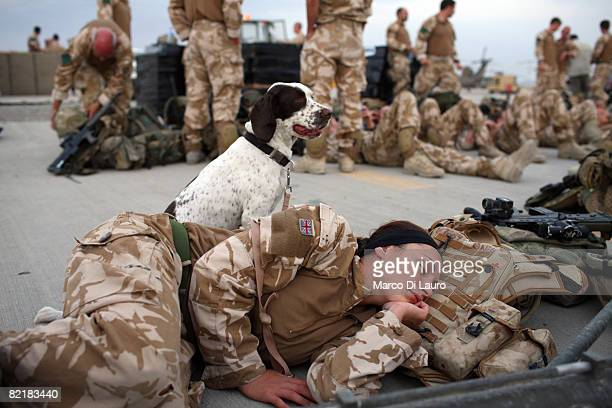 Lance Corporal Marianne Hay 24 from Aberdeenshire a soldier in the Royal Army Veterinary Corp and her arms and explosives dog Leanna attached to the...