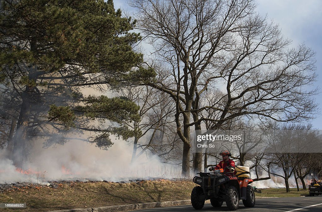 Land forrest consultant Jesse Henrich checks the progress of a controlled burn along the West Road in Toronto's High Park. A controlled burn in High Park was performed to protect and sustain rare black oaks. The oak seeds are so hard and tough that fire helps them germinate and establish new growth.