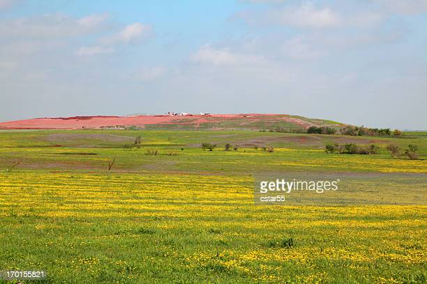 Landfill and Wildflowers