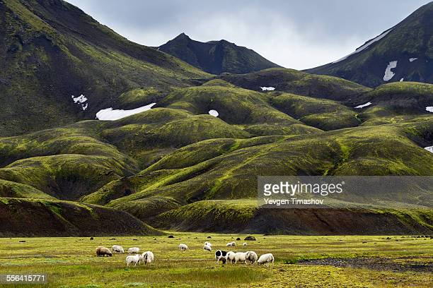 Landmannalaugar, Highlands of Iceland