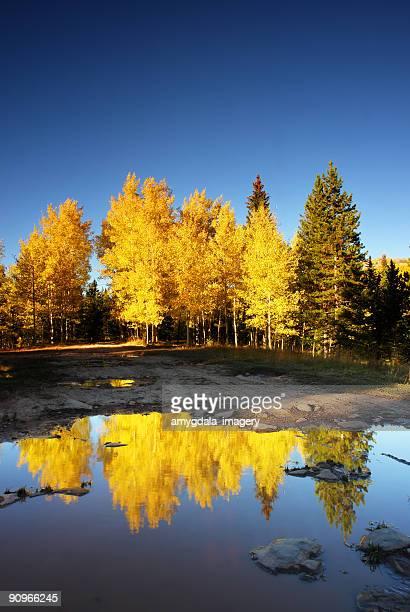 landscape autumn aspen lake reflection