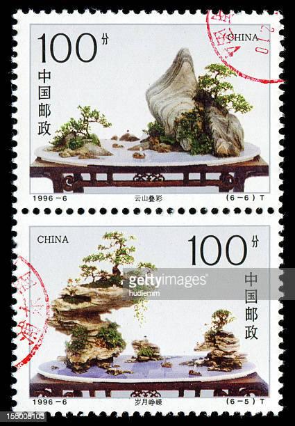 Paysage de bonsaï avec rocks (XXXL